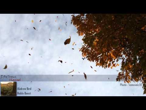 Andrew bird - Anonanimal [HD]