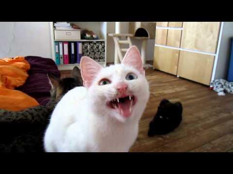 Milla, the Alien Cat