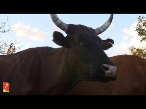 NoTill On The Plains - Allan Savory Clip
