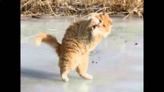 Прикольные имена для кошек