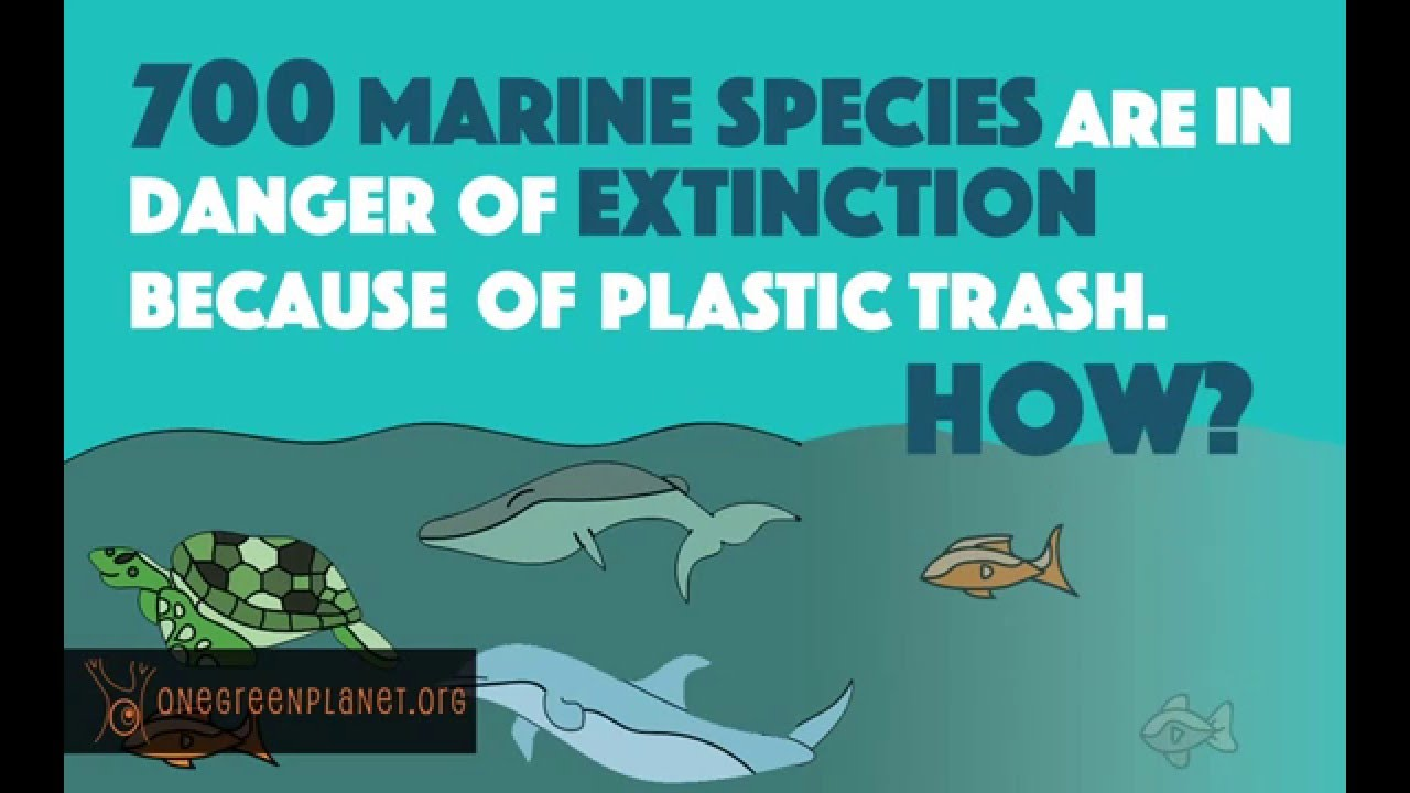 How Our Plastic Habit Impacts Marine Animals Youtube