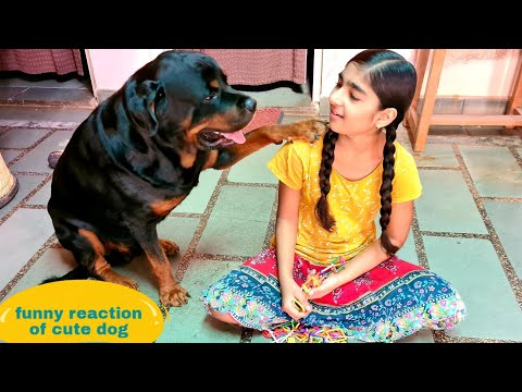 jerry's funny reaction||funny dog videos||dog training||trained dog||