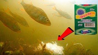 Плавленный сыр ДРУЖБА на дне реки! Подводная съемка