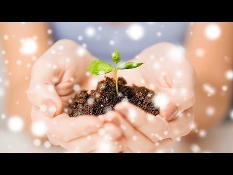 4 Ways to Make Christmas Eco-Friendly | Green Living
