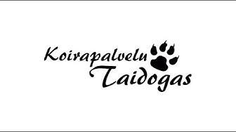 Iloinen koirakoulu Tampereen seudulla | Koirapalvelu Taidogas