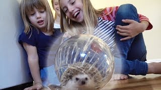 Hedgehog in a Ball ESCAPED!