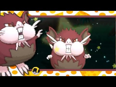Live!!! Shiny Alolan Raticate after 2,548 SRs in Ultra Moon (Phase 1)