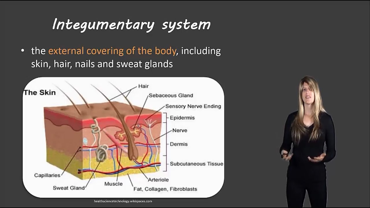 Integumentary System Essay Help Qvcourseworkxnowcjsite