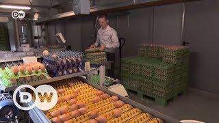 Куриные яйца изымают из продажи в Германии