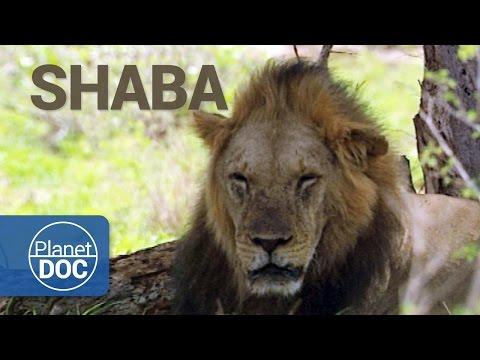 Documental Completo | Shaba. La Tierra de Dios y el Diablo - Planet Doc