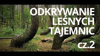 Lasy w Polsce — odc. 2 — czyta: K. Czubówna