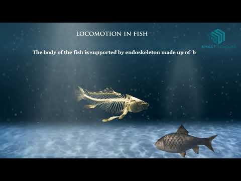 Locomotion In Animals- Science Animation