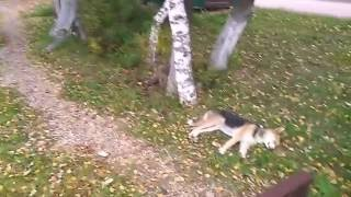 кругом стрельба, а собаке п...й