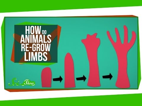 How Do Animals Re-Grow Limbs (And Why Can't We?)