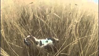 Kragejagt 22-03-2016 / Crow shooting