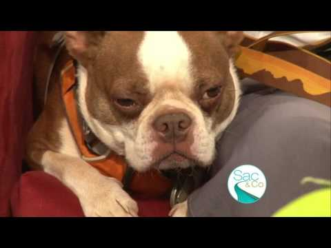 When to worry about your Dog Coughing and Sneezing! - YouTube