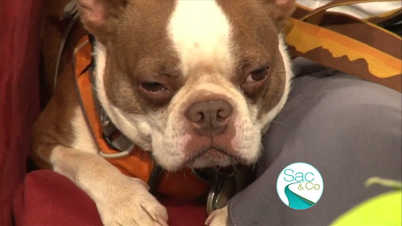When to worry about your Dog Coughing and Sneezing!