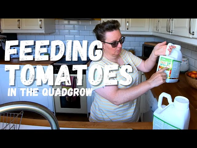 A very quick guide to feeding your tomatoes in the quadgrow