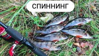 Ловля окуня на отводной поводок. Рыбалка на спиннинг. Окунь осенью. Отводной.