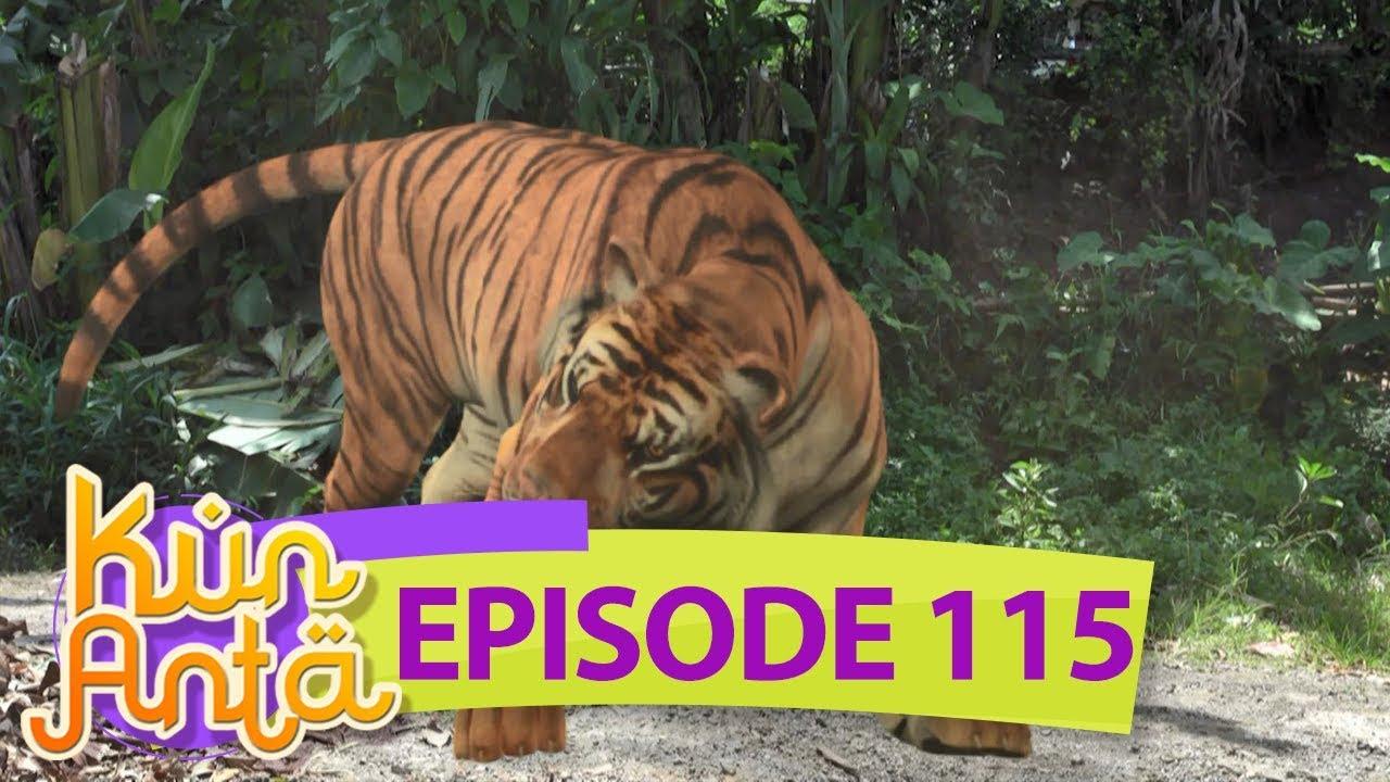 6600 Gambar Hewan Harimau Gratis Terbaik