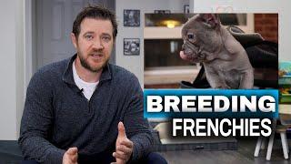 French Bulldog Breeding Process for New Breeders