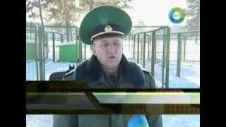 В Беларуси вывели новую породу пограничных собак
