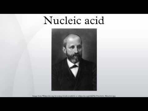 Nucleic acid