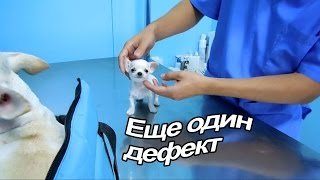 VLOG: Прививки и осмотр собак / У Пилота проблемы с челюстью / У Клима температура
