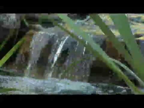 Break through in koi pond water quality doovi for Koi pond water quality