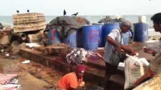 Fischmarkt (3), Negombo, Sri Lanka xxx