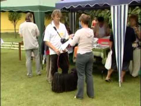 Miért lehet a pulit szeretni, beszámoló a puli fesztiválról 2010
