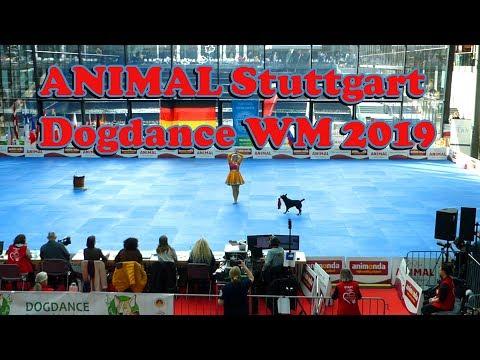 Dogdance WM 2019 & ANIMAL Stuttgart    mit BorderCollieNiwa