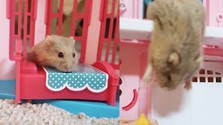my hamster's mansion