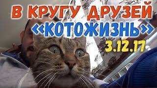 В кругу друзей ❖ КОТОЖИЗНЬ! 3.12.2017