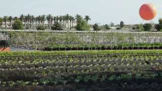Alegria Soxx Farms
