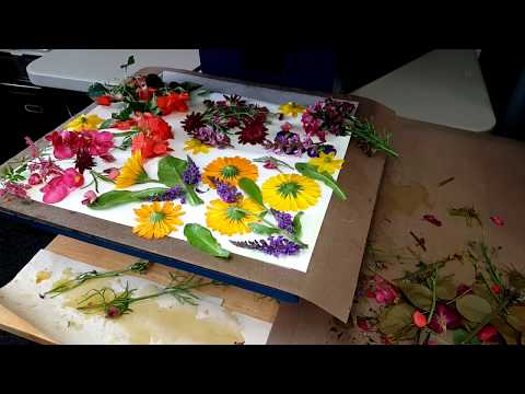Using a Heat Press to Steam Dye Paper with Flowers | Eco Printing | Steam Dying