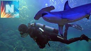 Океанариум ЧТО ОТ НАС СКРЫВАЛИ морские обитатели ТИГРОВАЯ АКУЛА МОРСКАЯ ЧЕРЕПАХА В АКВАРИУМЕ КТО БОЛ