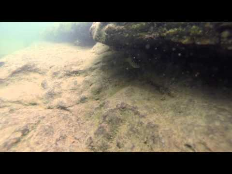 Underwater Structure + Fish at Greers Ferry