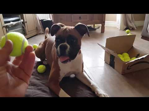 UNBOXING Fan Mail For my Dog!