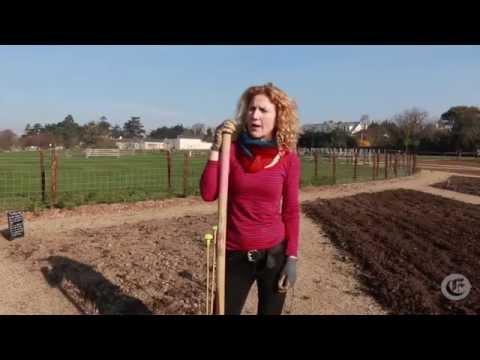 Organic vegetable gardening: Week 1 - Asparagus