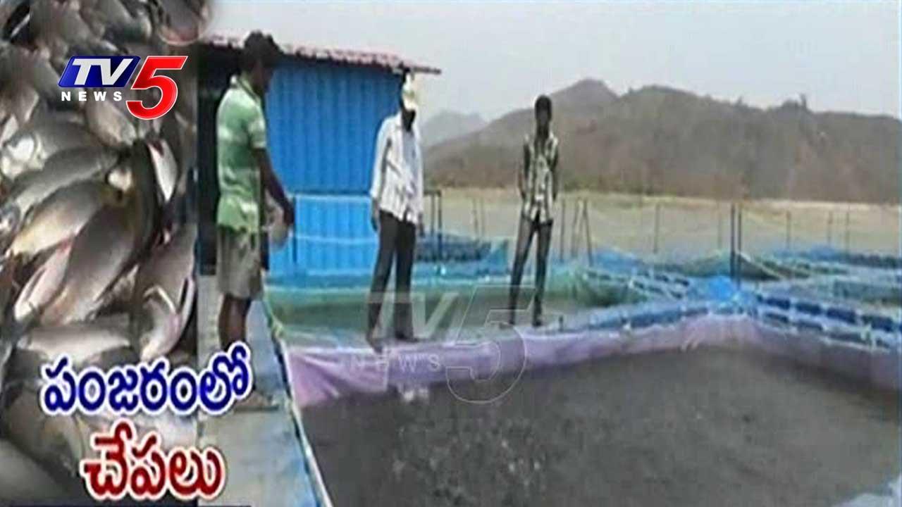 Cage System For Fish Farming In Vizianagaram | Pedda Gedda Reservoir | AP  Government | TV5 News