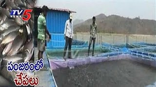 Cage System For Fish Farming In Vizianagaram | Pedda Gedda Reservoir | AP Government | TV5 News