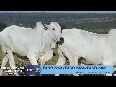 LOTE 89 FANO 2269 X 2423 X 2369