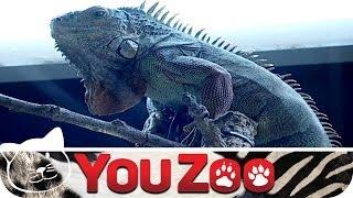 Deutschlands größte Zoohandlung │YouZoo
