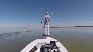 Epic Tarpon Fly Eat FL Everglades Charter Sight Fishing