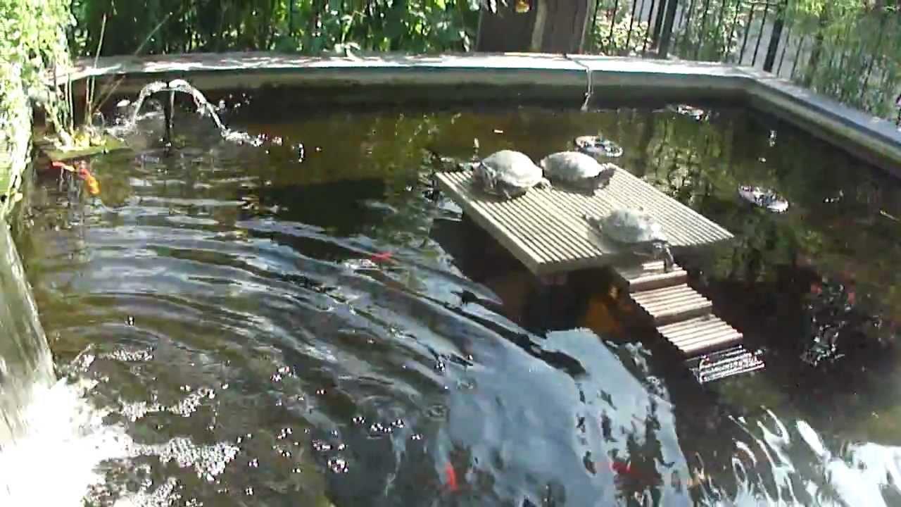 Turtle crusoe new home youtube for Grote vijverbakken