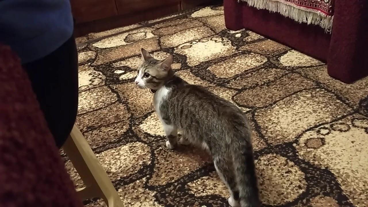Смешные Кот и Собака - YouTube