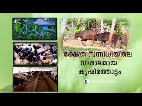The Vast farm in the Temple premises | Haritham Sundaram | Kaumudy TV