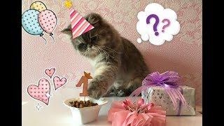 Happy birthday little cat / Честит Рожден ден, Алиса! Funny cats