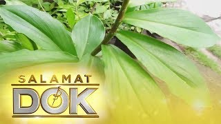 Salamat Dok: The use of spiral flag or insulin plant